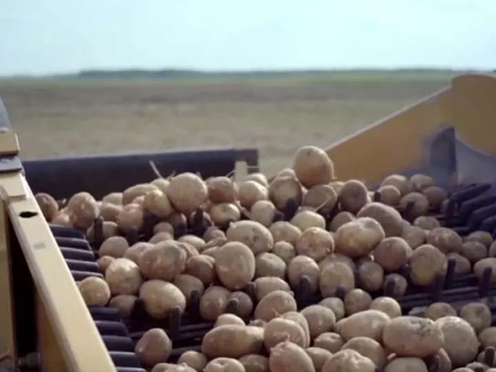potato-supply-chain