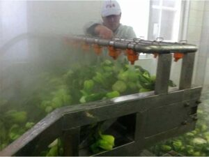 vegetable blanching technology
