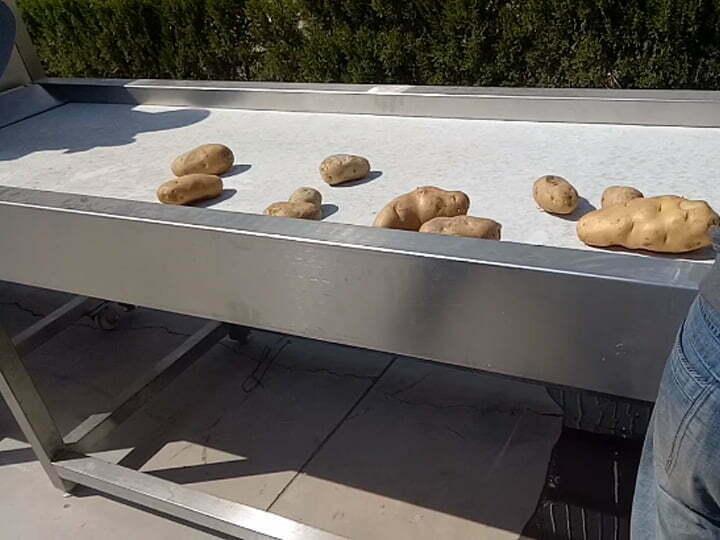 picking potatoes